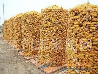 山东圈玉米电焊网产品厂家 山东电焊网产品特点 山东电