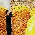 圈玉米电焊网厂家 圈玉米电焊网产品材质 圈玉米电焊网产品规格