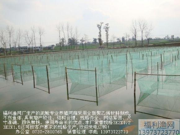 黄鳝网箱-黄鳝养殖网箱-黄鳝高产新技术