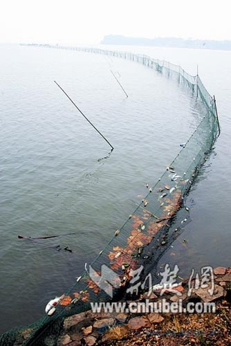 拦网,拦网养鱼,拦网养鱼技术,拦网厂家 -沅江市福利