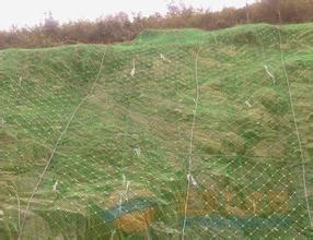 边坡绿化喷播勾花网厂家专业订制远销全国
