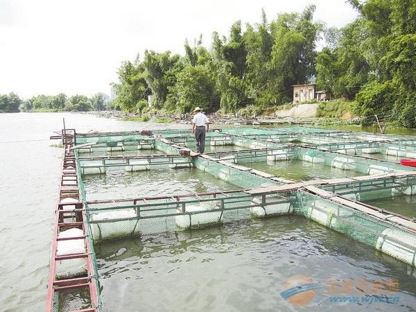 渔网厂,中国渔网厂,渔网批发,尼龙渔网批发,渔网专卖店