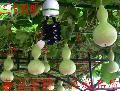 紫光养殖灯