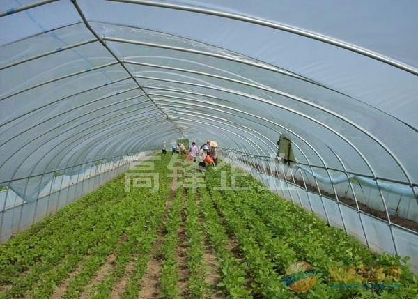 蜂窝型PC阳光板,中空阳光板温室