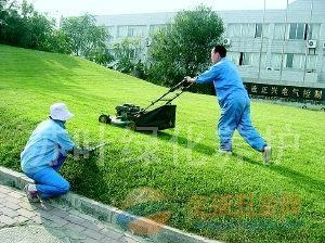 苏州厂房绿化保养服务