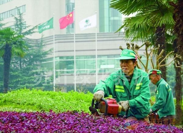 苏州厂区绿化养护管理