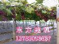 供应各种水果棚架立柱机架杆机