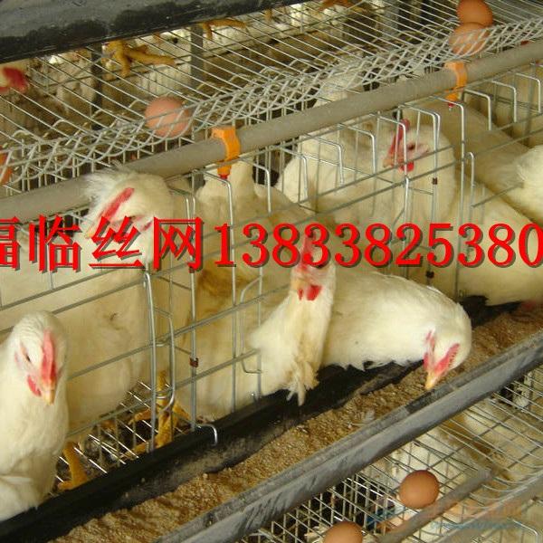 鸡笼子优质服务商