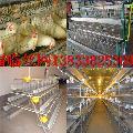 蛋鸡笼中坡食槽饮水器