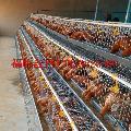 安平H型蛋鸡笼厂家