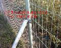 出口钢丝网护栏 镀锌钢丝网 护栏钢丝网