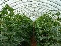 北京温室蔬菜大棚