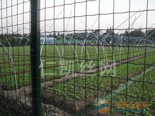 青岛包塑种植围栏网