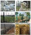 荷兰网,养殖网